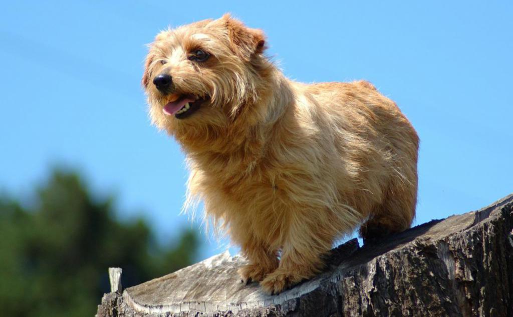 норные породы собак