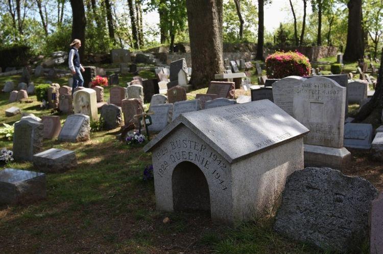 Как похоронить собаку: правила и законные места