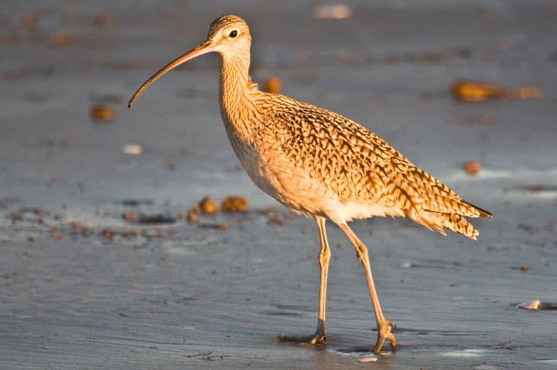 птицы с длинным клювом в россии переименовали