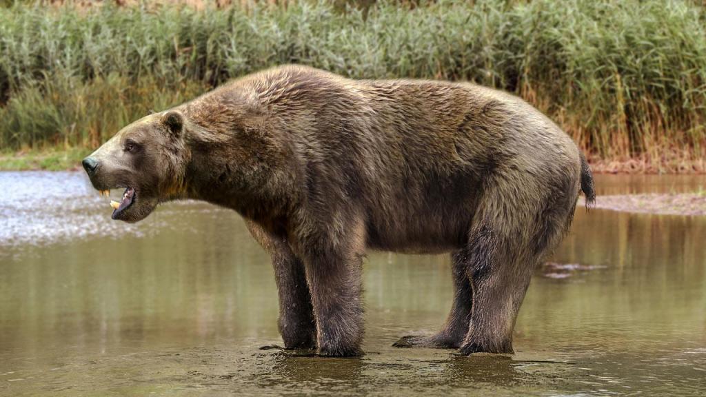 доисторический медведь