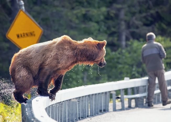 do black bears attack humans - HD1440×1028