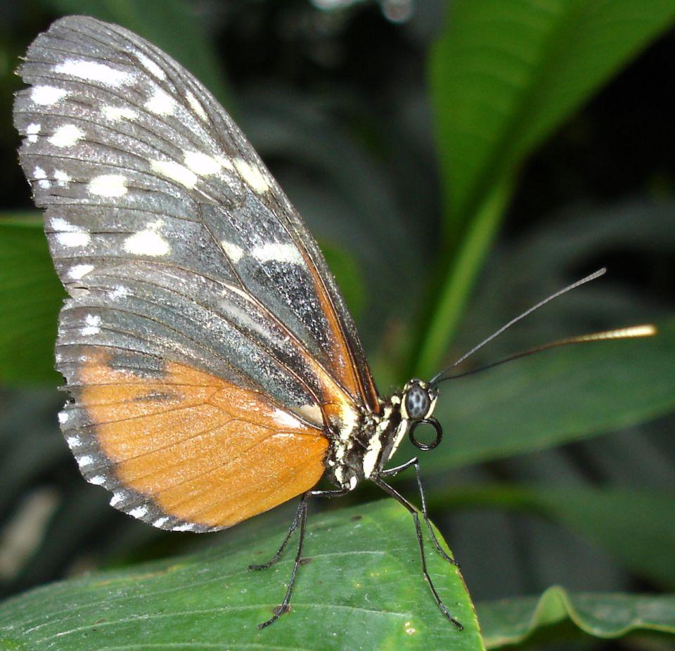 Ориентирование по крыльям бабочки