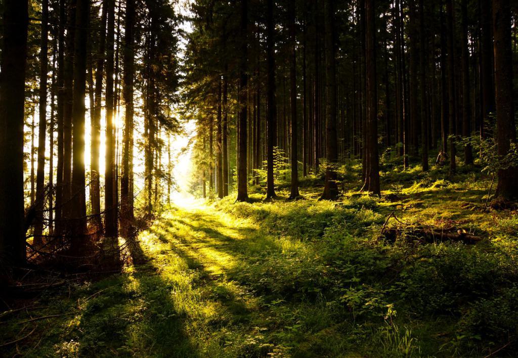 Ориентирование в лесу по солнцу