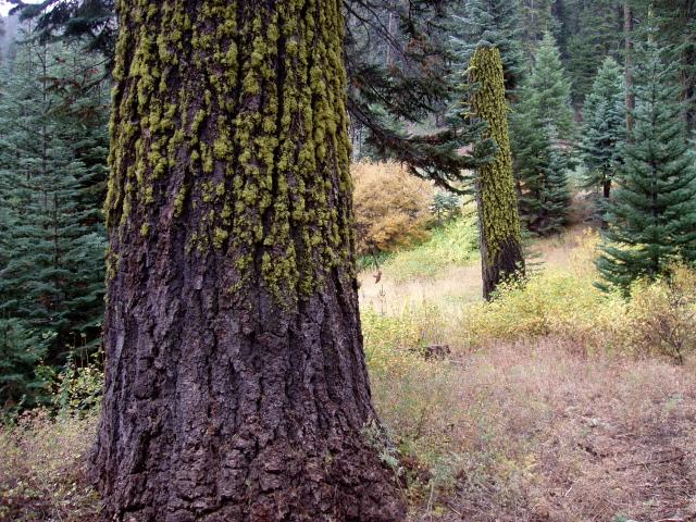 Мхи и лишайники на дереве