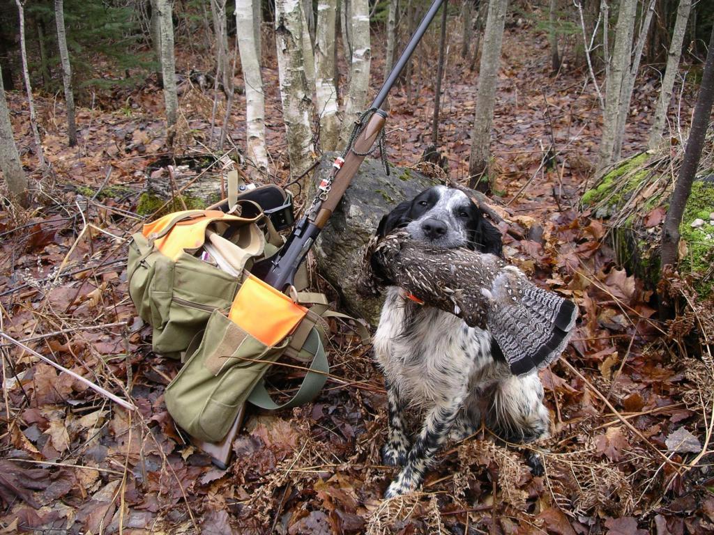 результаты хорошей охоты