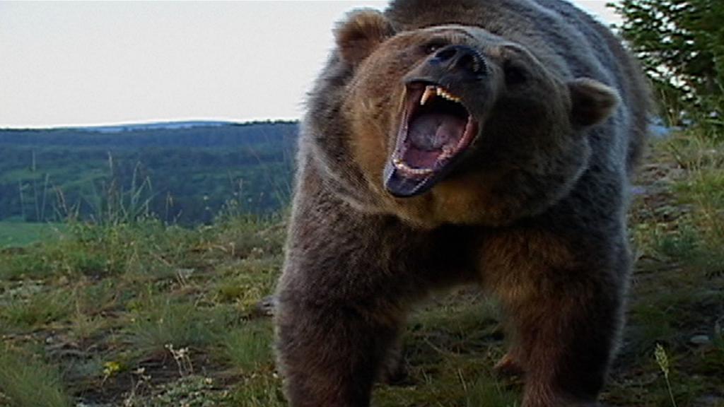 Фото татуировок с изображением медведя загадка вывела