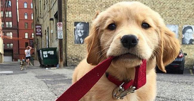 щенок на прогулке