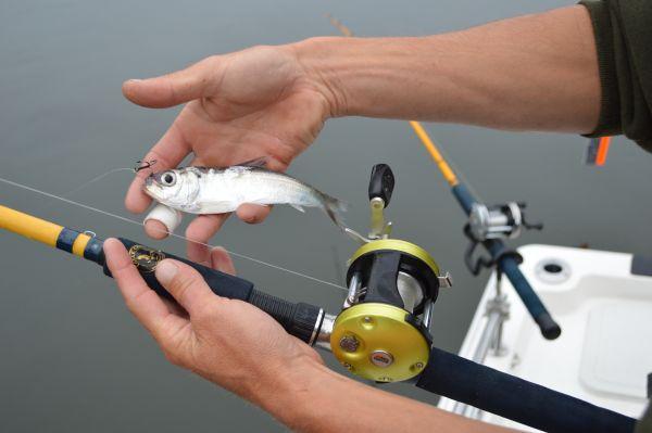Живцовая рыбалка летом