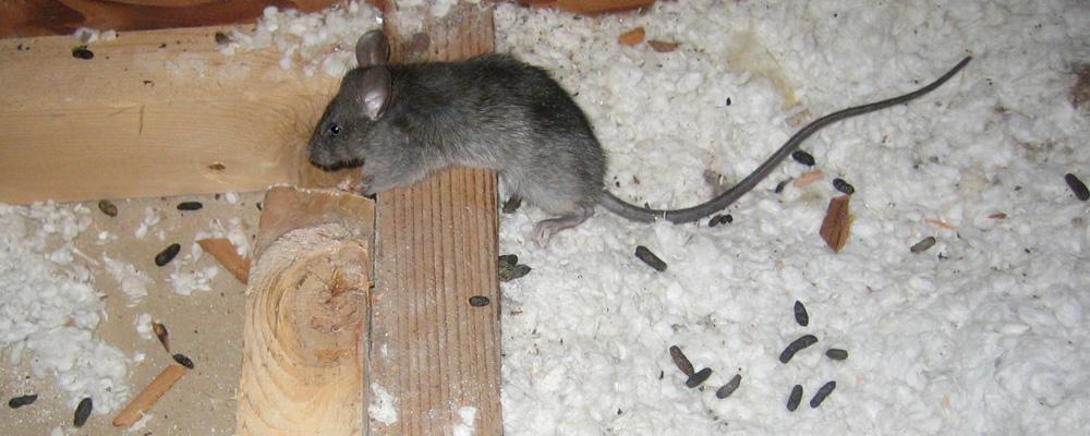 сказку про какой помет у мыши фото отзывы, фото