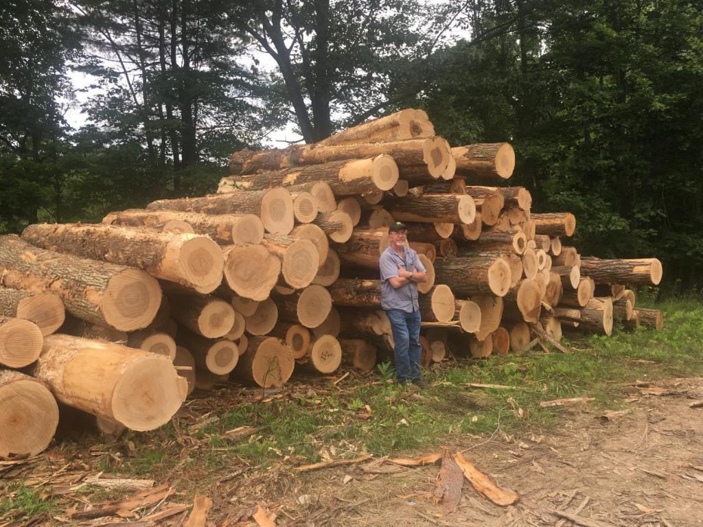 бесплатный лес для строительства дома
