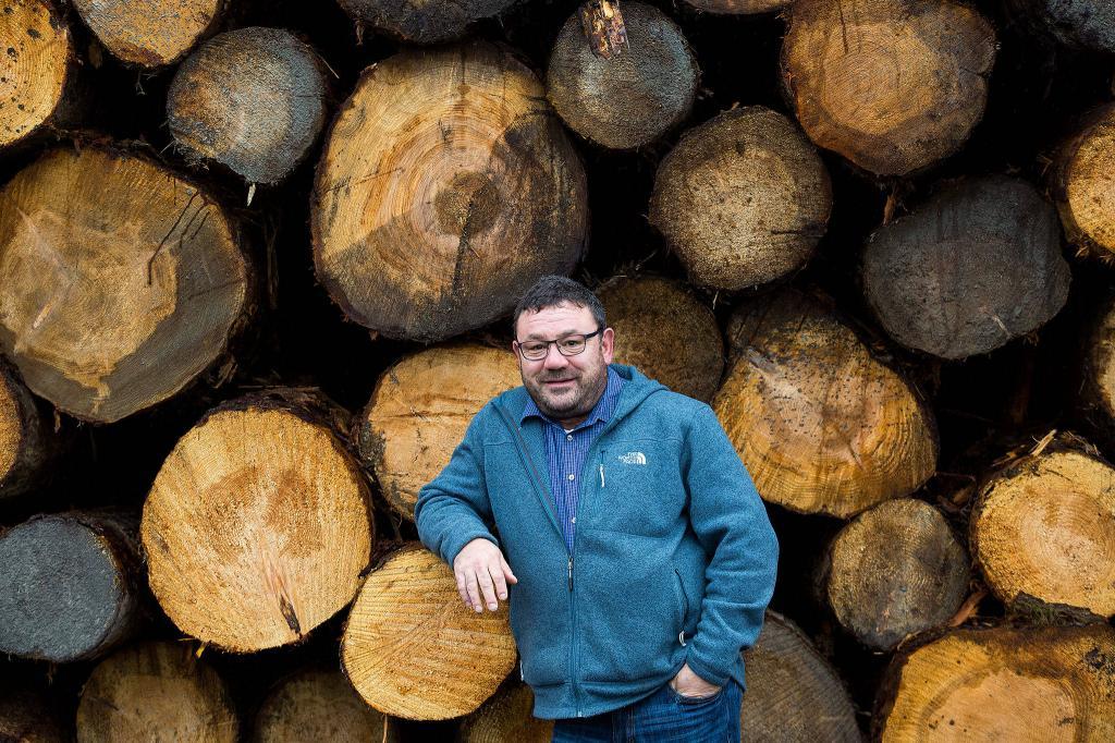 как получить лес на строительство