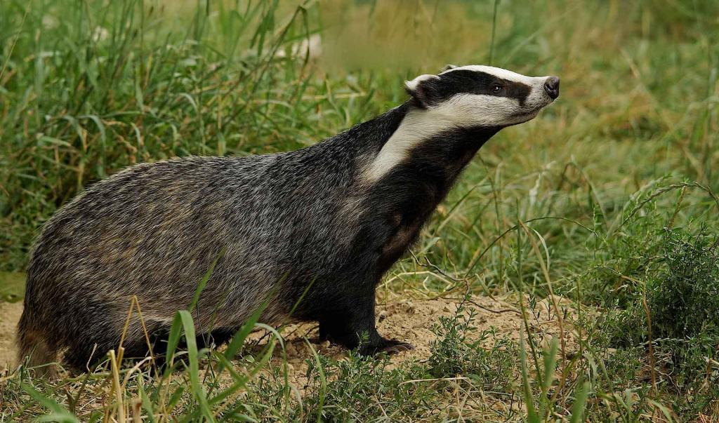 Кто душит кур названия животных особенности их охоты причины и способы борьбы